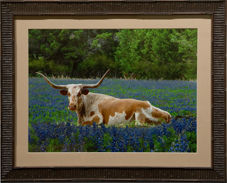 Lazy Longhorn by artist Randy Smith