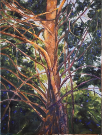 Creek Bottom Cedar by artist Tammy Brown