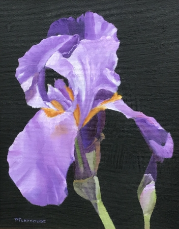 Purple Iris by artist Pat Flathouse