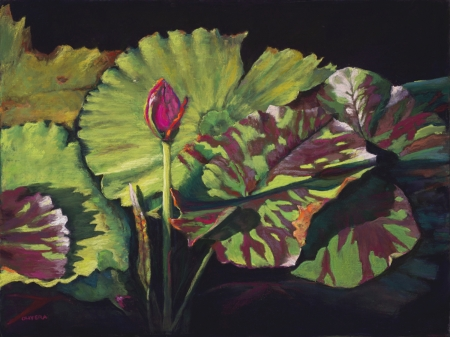 WaterLily Morning by artist Mary Olivera