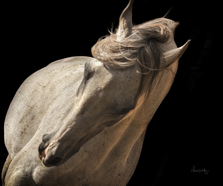 Graceful Grey by artist Claire Porter