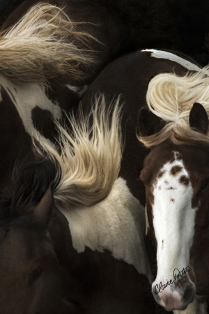 Painted Manes by artist Claire Porter