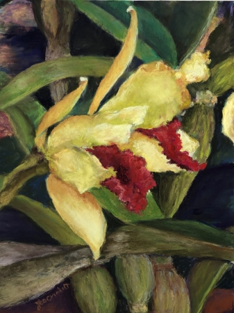 The Grand Opening - Cattleya II by artist Julie Schmidt