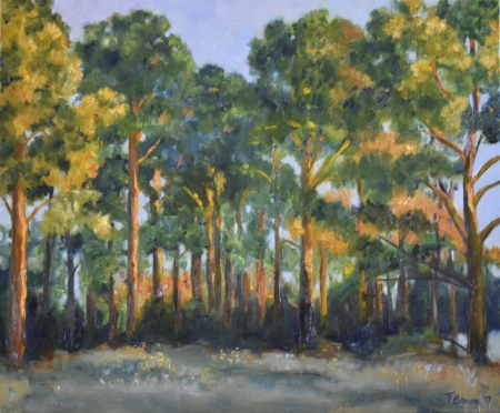 Pines at Dusk by artist Tammy Brown
