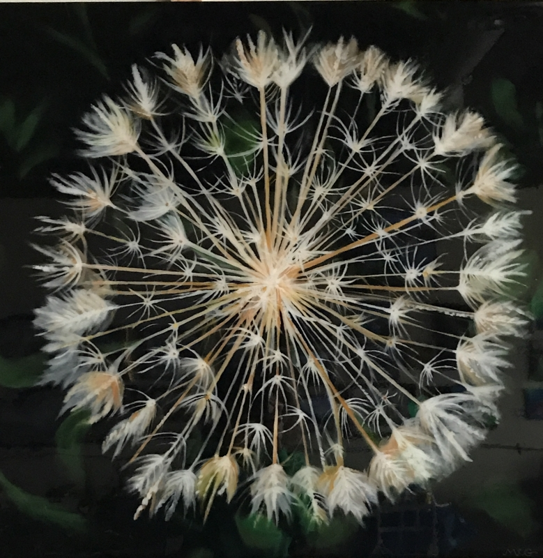 Dandelion by artist Mary Wallace-Green